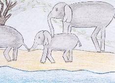 obrázek 1770